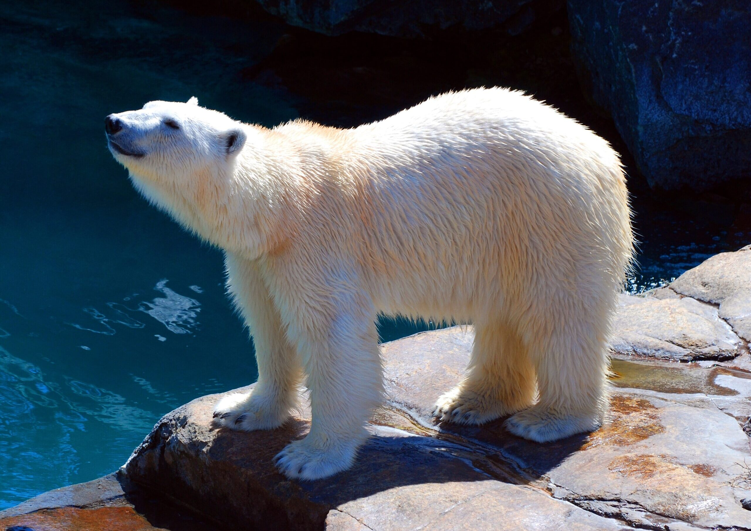 Роснефть и Иннопрактика разработали препарат для очистки Арктики от нефти